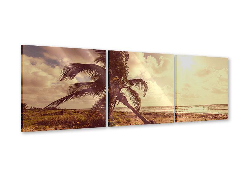 Panorama Acrylglasbild 3-teilig Die schiefe Palme