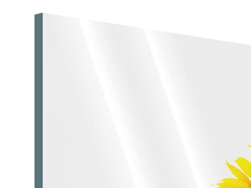 Panorama Acrylglasbild 3-teilig Das Sonnenblumenfeld