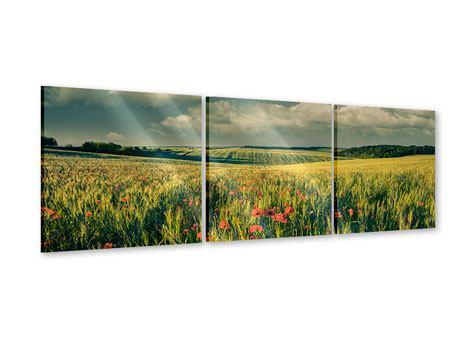 Panorama Acrylglasbild 3-teilig Der Mohn im Weizenfeld