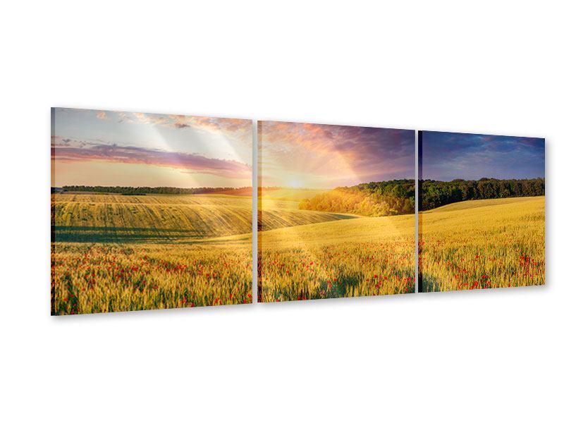 Panorama Acrylglasbild 3-teilig Ein Blumenfeld bei Sonnenaufgang