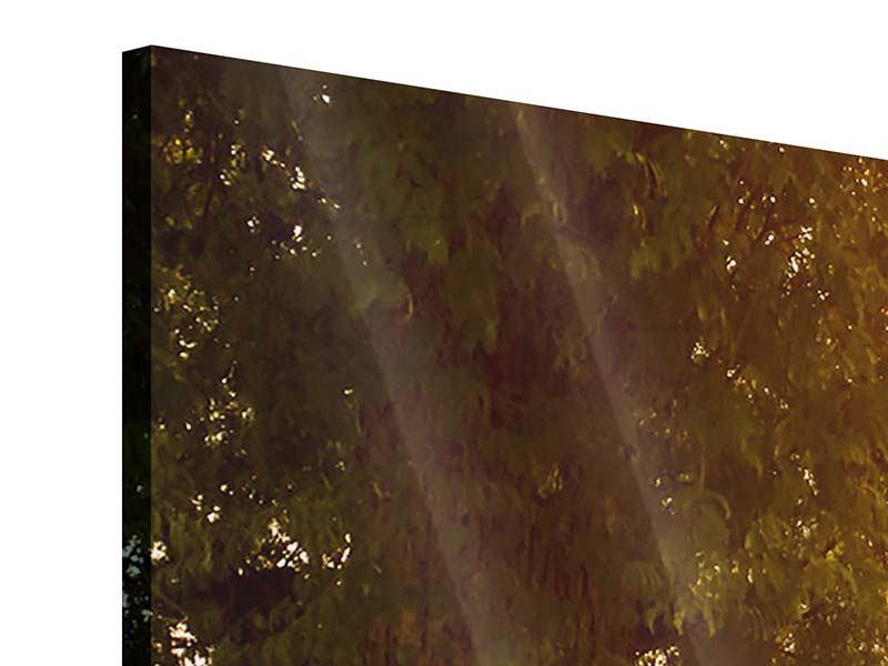 Panorama Acrylglasbild 3-teilig Romantik unter Bäumen