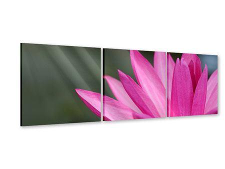 Panorama Acrylglasbild 3-teilig XXL Seerose in Pink