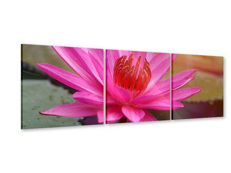 Panorama Acrylglasbild 3-teilig Sonnige Seerose
