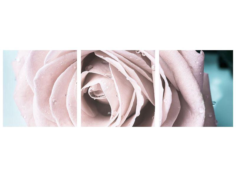 Panorama Acrylglasbild 3-teilig Pastellrose