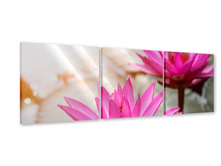 Panorama Acrylglasbild 3-teilig Lotus-Duo