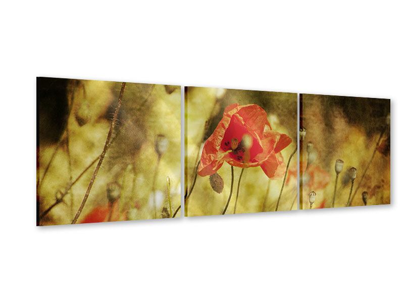 Panorama Acrylglasbild 3-teilig Der wilde Mohn