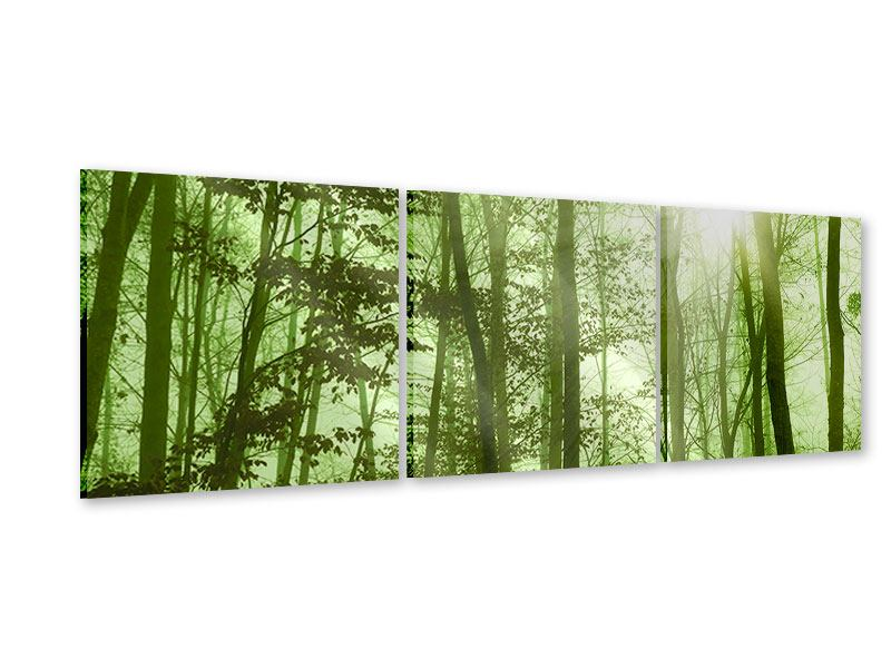 Panorama Acrylglasbild 3-teilig Nibelungenwald