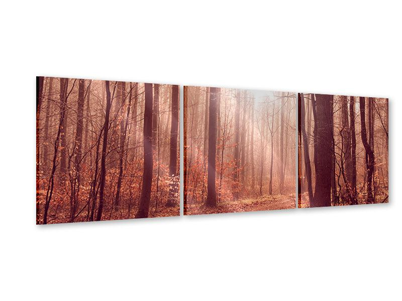 Panorama Acrylglasbild 3-teilig Sonnenuntergang im Herbstwald