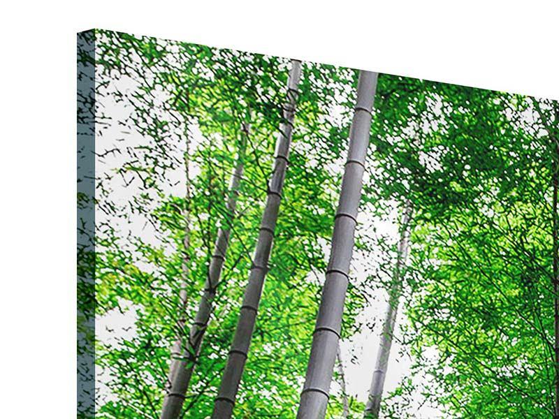 Panorama Acrylglasbild 3-teilig Bambuswald