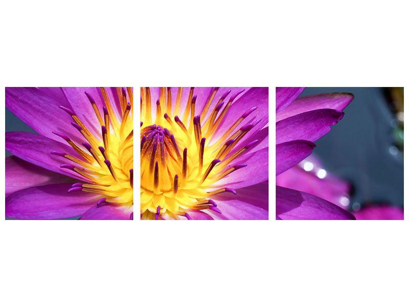 Panorama Acrylglasbild 3-teilig Makro Seerose in Lila