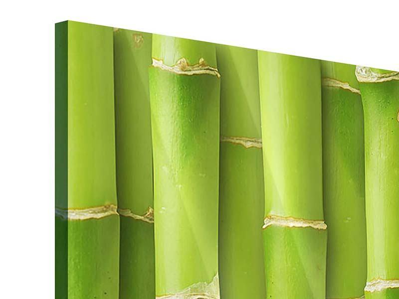 Panorama Acrylglasbild 3-teilig Bambuswand