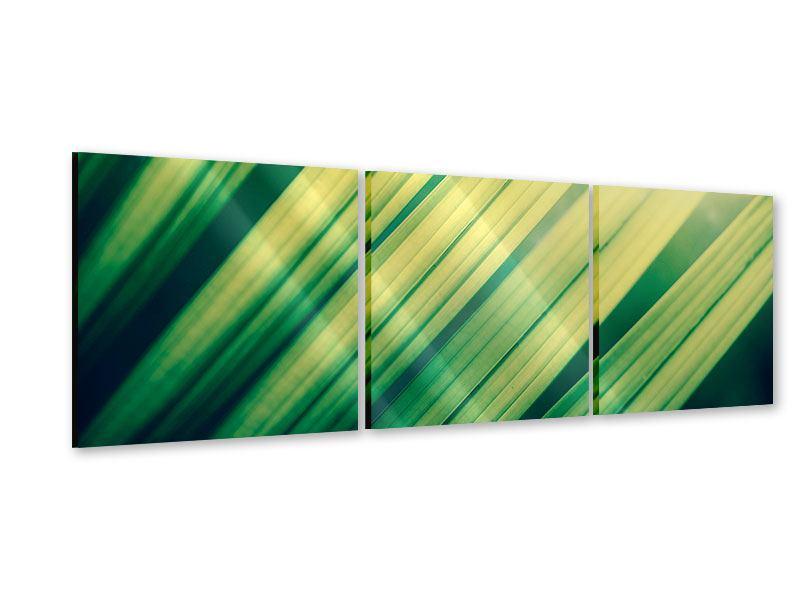 Panorama Acrylglasbild 3-teilig Beleuchtetes Palmblatt