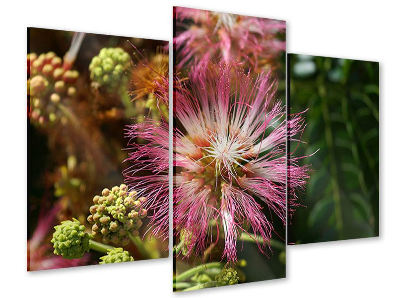 Acrylglasbild 3-teilig modern Die Regenbaumblüte