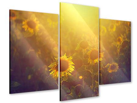 Acrylglasbild 3-teilig modern Sonnenblumen im goldenen Licht