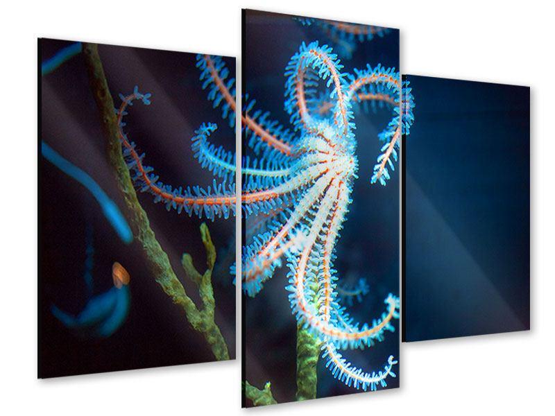 Acrylglasbild 3-teilig modern Aquarium