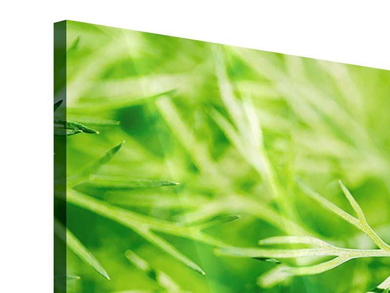 Acrylglasbild 3-teilig modern XXL Dill