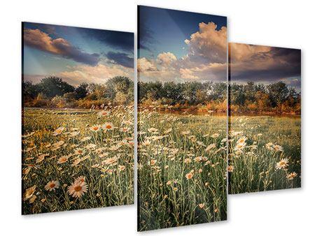Acrylglasbild 3-teilig modern Die Wiesenmargerite am Fluss