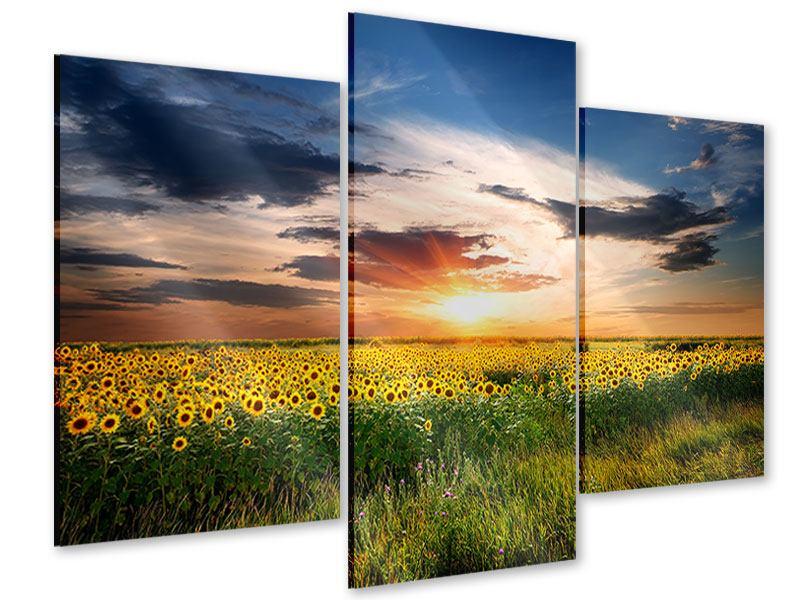 Acrylglasbild 3-teilig modern Ein Feld von Sonnenblumen
