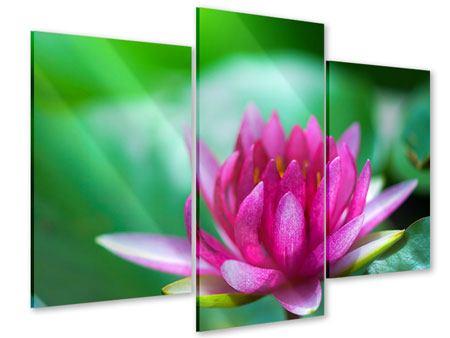 Acrylglasbild 3-teilig modern Lotus in Pink