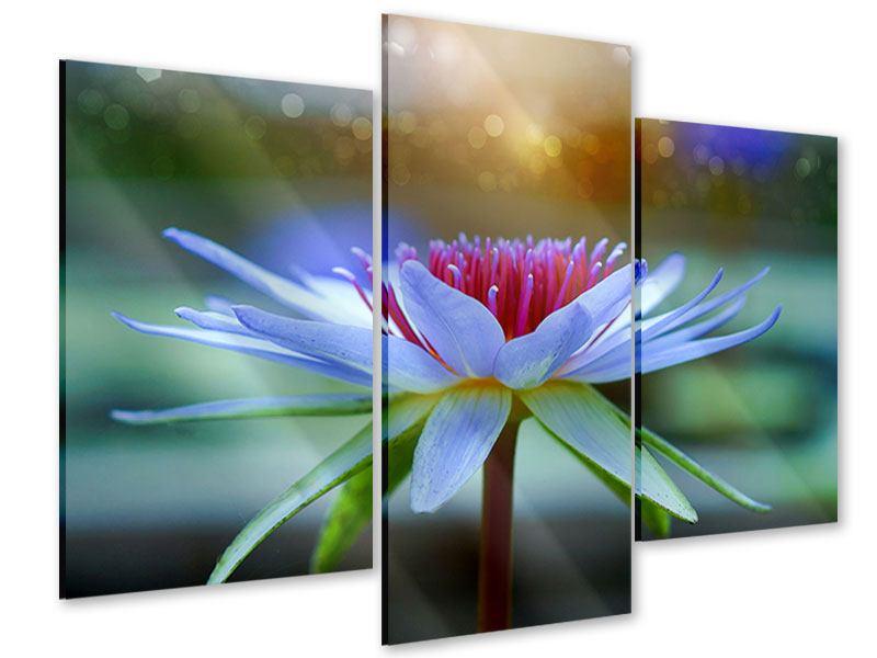 Acrylglasbild 3-teilig modern Pretty Lotus