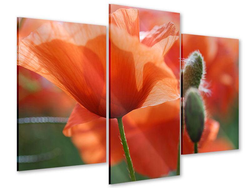 Acrylglasbild 3-teilig modern Klatschmohn XXL