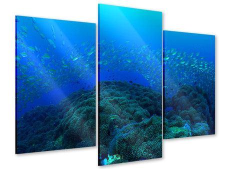 Acrylglasbild 3-teilig modern Fischschwärme