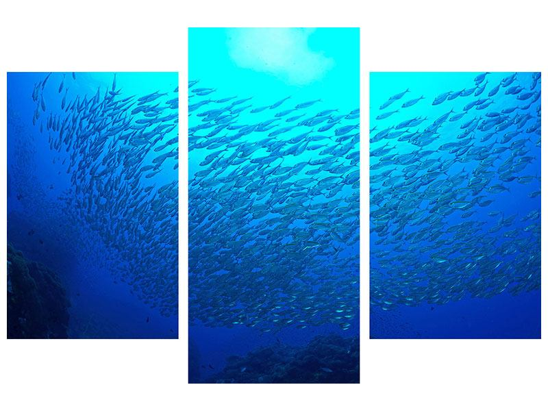 Acrylglasbild 3-teilig modern Fischwelt