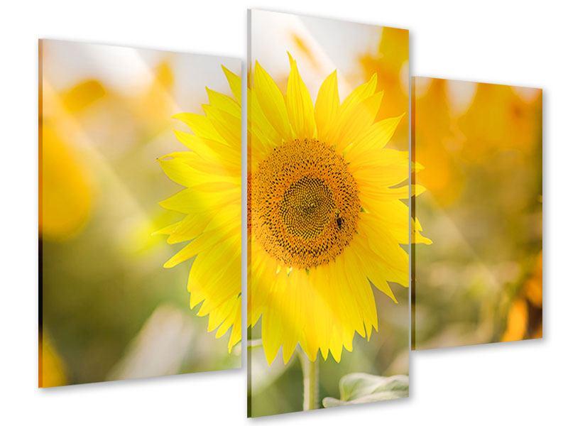 Acrylglasbild 3-teilig modern Sunflower
