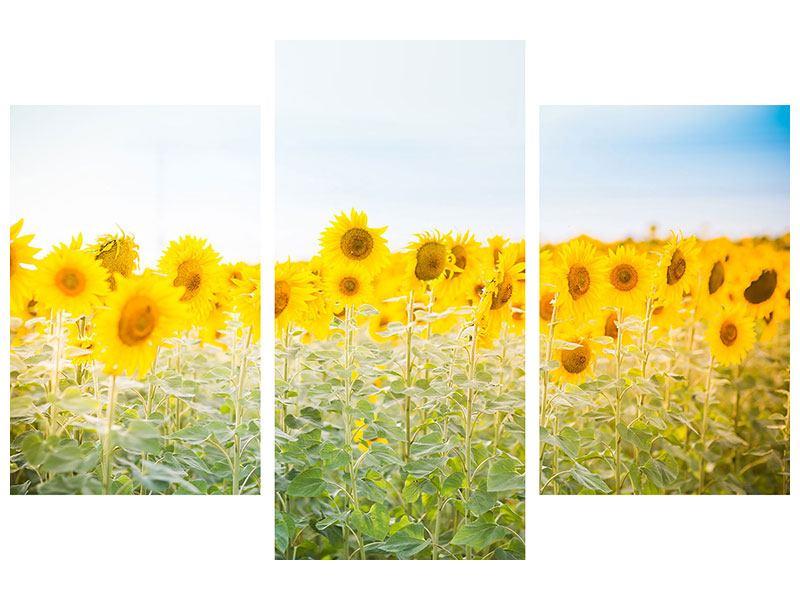 Acrylglasbild 3-teilig modern Im Sonnenblumenfeld
