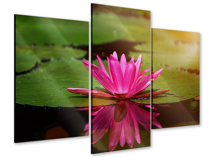 Acrylglasbild 3-teilig modern Lotus im Wasser
