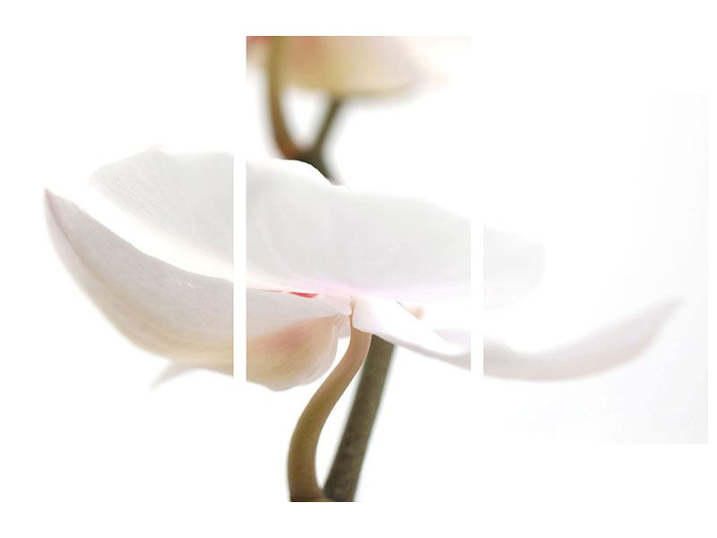 Acrylglasbild 3-teilig modern XXL Orchideenblüte