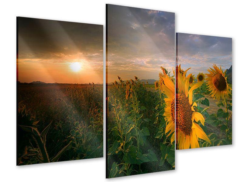 Acrylglasbild 3-teilig modern Sonnenblumen im Lichtspiel