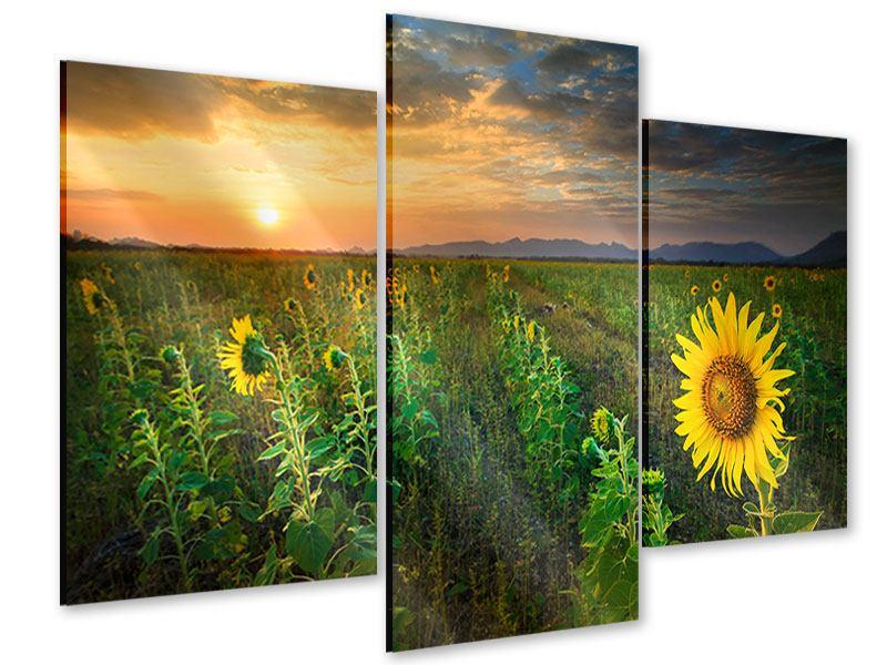 Acrylglasbild 3-teilig modern Sonnenblumenfeld im Abendrot