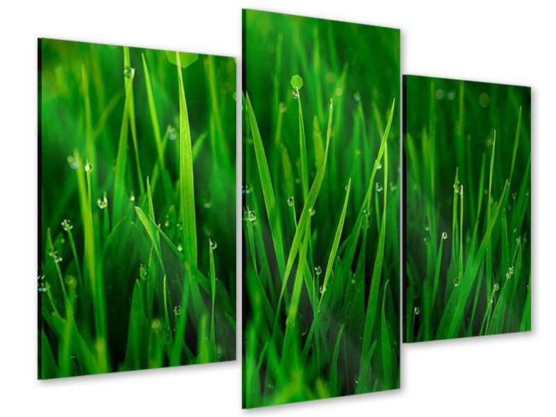 Acrylglasbild 3-teilig modern Gras mit Morgentau