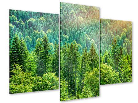 Acrylglasbild 3-teilig modern Der Waldhügel