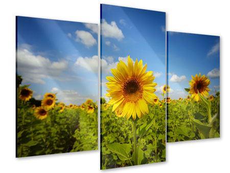 Acrylglasbild 3-teilig modern Sommer-Sonnenblumen