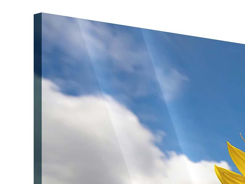 Acrylglasbild 3-teilig modern Das Feld der Sonnenblumen