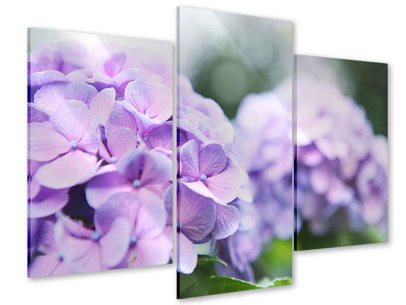 Acrylglasbild 3-teilig modern Hortensien
