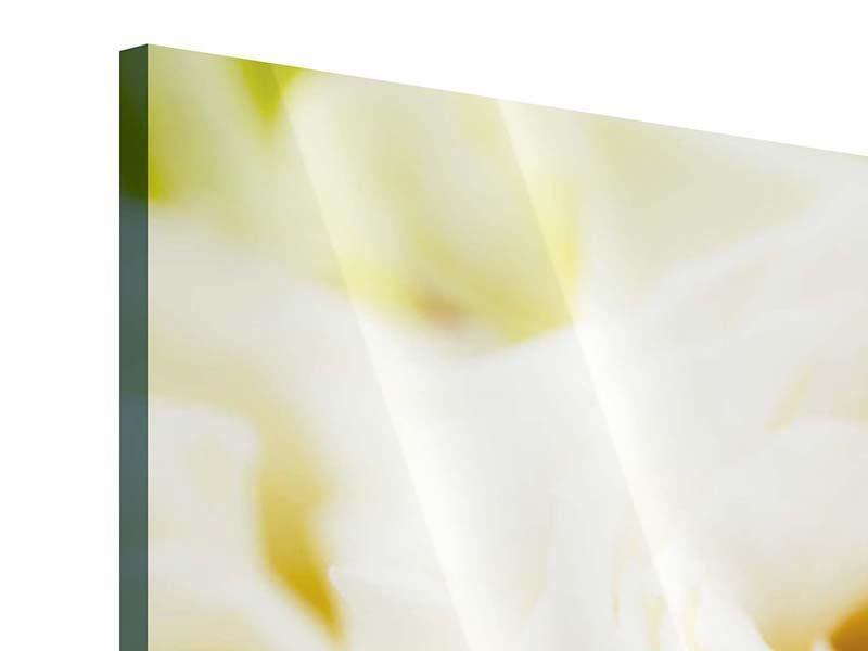 Acrylglasbild 3-teilig modern Trauringe auf Rosen gebettet