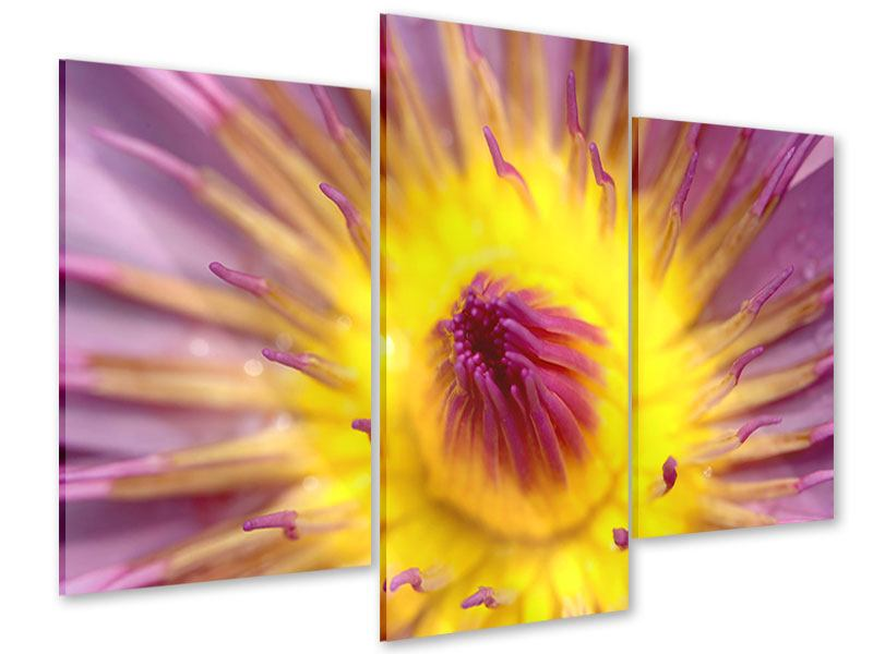 Acrylglasbild 3-teilig modern XXL-Lotus