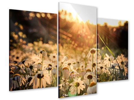 Acrylglasbild 3-teilig modern Gänseblümchen bei Sonnenuntergang