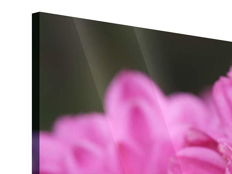 Acrylglasbild 3-teilig modern Chrysanthemen