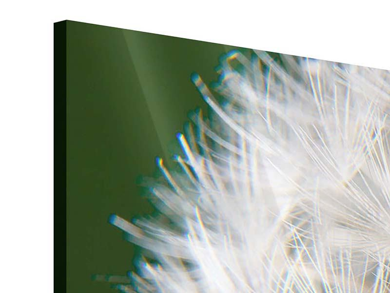Acrylglasbild 3-teilig modern Riesenlöwenzahn