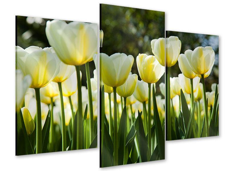 Acrylglasbild 3-teilig modern Tulpen bei Sonnenuntergang
