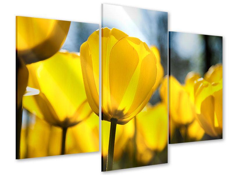 Acrylglasbild 3-teilig modern Gelbe Tulpen in XXL