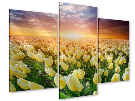 Acrylglasbild 3-teilig modern Sonnenaufgang bei den Tulpen