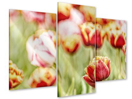 Acrylglasbild 3-teilig modern Die Schönheit der Tulpe