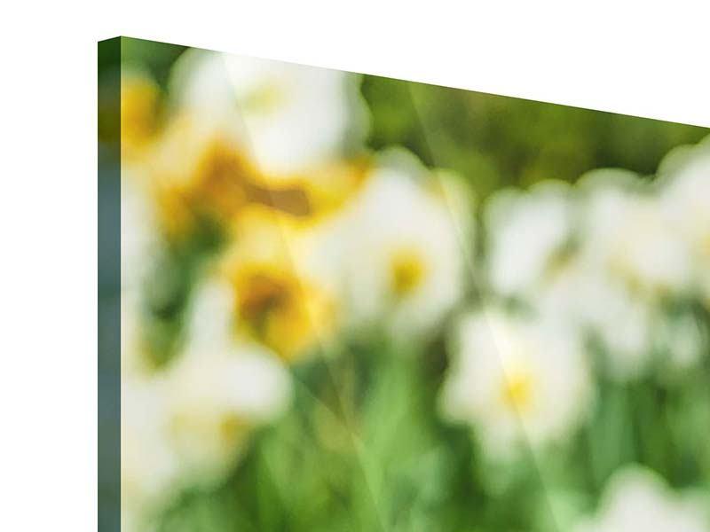 Acrylglasbild 3-teilig modern Ein Garten mit Tulpen