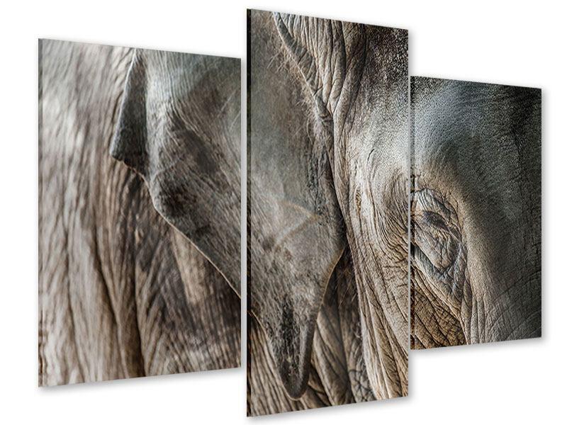 Acrylglasbild 3-teilig modern Close Up Elefant