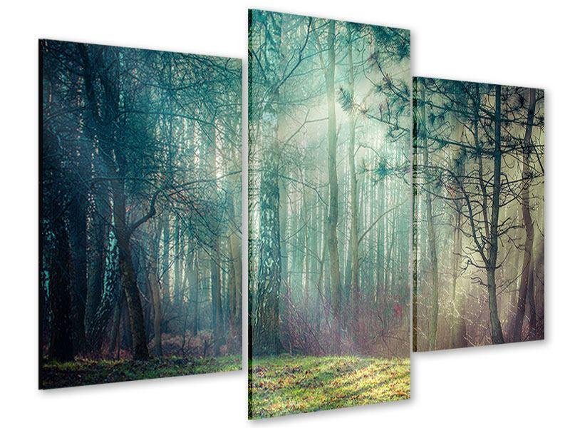Acrylglasbild 3-teilig modern Pinienwald